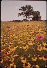 TEATRANKI | Wywoływanie wiosny | grupa starsza